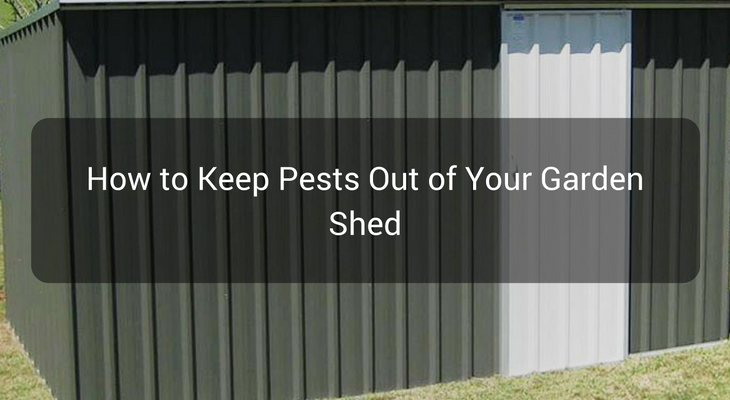 How to Keep Pests Out of Your Garden Shed